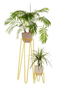 Mid-century Modern Wire Plant Stand L Size + Plant stand S Size at Special Price Mid-century Modern Modern Plant Stand, Metal Plant Stand, Plant Stands, Pots, Home Decoracion, Purple Plants, Iron Plant, Decoration Plante, Large Plants