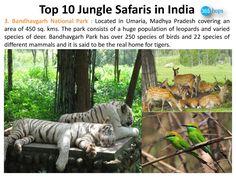 Bandhavgarh National Park >>> http://www.edocr.com/doc/193003/top-10-jungle-safaris-india  #MadhyaPradesh #Bandhavgarh #NationalParks, #WildlifeSanctuary, #WildlifeSafaris, #JungleSafaris #India #365Hops
