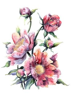 New Ideas Vintage Pink Art Botanical Prints Art Floral, Floral Prints, L'art Du Fruit, Fruit Art, Flower Bouquet Drawing, Flower Art, Watercolor Flowers, Watercolor Paintings, Watercolour
