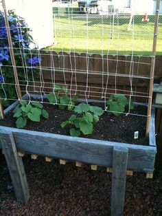 Cucumber trellis I built today Gurkengitter Gardening For Beginners, Gardening Tips, Cucumber Trellis, Pot Jardin, Diy Trellis, Organic Gardening, Urban Gardening, Vegetable Gardening, Garden Boxes