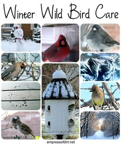 Winter wild bird care - how to keep the birds fed and happy