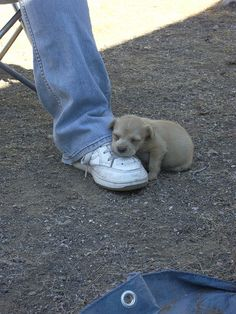 This cute little puppy tries to keep this foot nice and warm outside! | #TheShoeMart #CozyToes