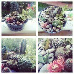 My little cactus garden :)