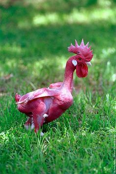 An Israeli geneticist, Avigdor Cahaner, created the world's first featherless chicken at the genetics faculty at the Rehovot Agronomy Institute near Tel Aviv, Israel. The bare-skinned bird was created by cross breeding a broiler with a species that has a featherless neck