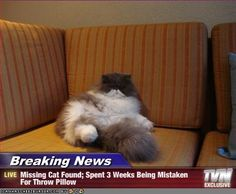 Caption: Missing cat spent three weeks being mistaken for a throw pillow.