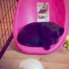 A Place for Two Dogs | Funny Cat GIFs