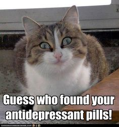 cat found the antidepressants!