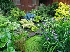 The beauty and variety of foliage! Lush shade planting.