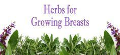 There are many herbs that help with growing breasts naturally. This directory will highlight some of the most popular herbs used in Natural Breast Enlargement