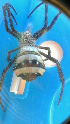 Alien spider?