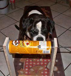 Boxerhund am Hunde-Intelligenzspielzeug-Rollenspiel