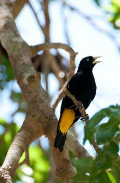 Pantanal Matogroso , Brazil