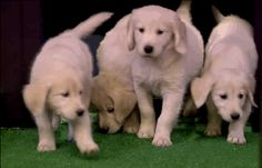 Which foreign city you'll feel the least lost in. | 12 Things We Wish Jimmy Fallon's Puppies Could Predict
