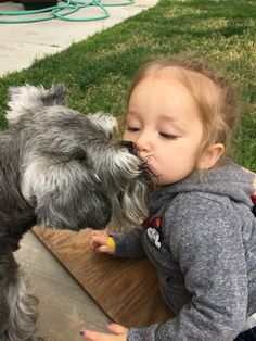The best kisses ever are schnauzer kisses ✨ Zackary Schnauzer❤️