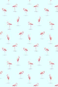 10 Best Flamingo Images Flamingo Pink Flamingos Flamingo Wallpaper