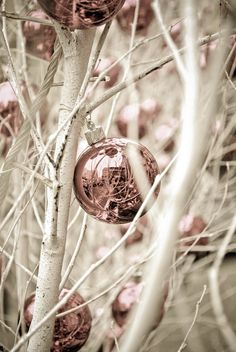 Vintage Christmas. White snowy branches with pink and mauve decorations.