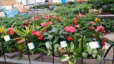 $49.95 Peruvian planters