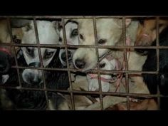 Take dog and cat meat off the menu.. Please sign