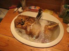 Ofurô cute cute - Os grandes momentos do banho dos animais - Fotos - UOL