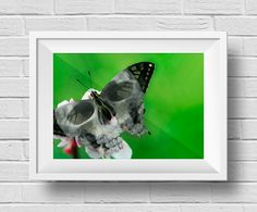 Mariposa de la muerte - Animal Híbrido - Técnica: Montaje y retoque digital - Autora: Angie C. Becerra - DD2
