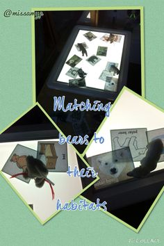 Exploring real bears and there habitats