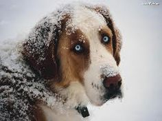 Dog Days of Winter: Keeping pets safe and warm. Consider the size of your pet and coat length when your pets go outside. The smaller the pet and haircoat the less tolerant they are of cold weather. Check out this link for more information and more great winter safety tips: http://www.nlm.nih.gov/medlineplus/news/fullstory_132828.html