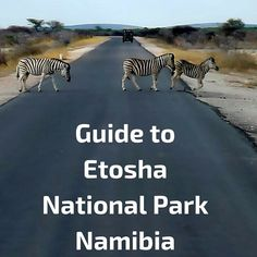Guide to help you plan your visit to Etosha National Park, Namibia: getting there, planning, accomodation, widlife, driving rules