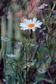 Untitled by Magda Wasiczek, via 500px