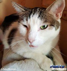 Dzisiaj Dzień Kota – ślijcie zdjęcia i filmy #Oświęcim #Dzieńkota #koty #kotki #kot #kotka #kociagaleria