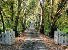 Tree lined drive and white picket fence~so inviting.
