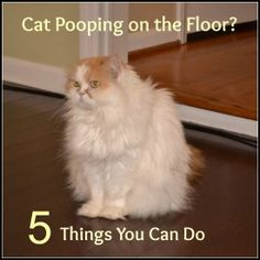 5 Reasons Your Cat Might be Pooping on the Floor | http://www.thehappylitterbox.com/2012/08/cat-pooping-outside-the-litter-box-5-things-to-consider/