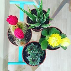 Went rollerblading last night and brought back these succulents. I can't decide where to put them now...any ideas?
