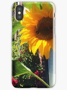 """""""Sunflower in Sunny Amsterdam Ft. 2 Little Bees"""" iPhone Cases & Covers by Chris  Kelly   Redbubble"""