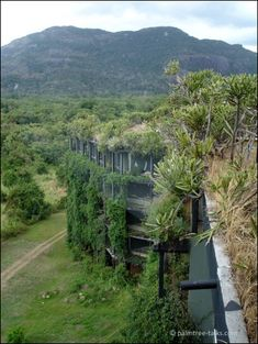 The Kandalama Hotel in Sigirya, designed by architect Geoffrey Bawa