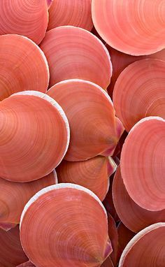 Shell, A Gift From the Sea coquillage coral living nuancier pantone 2019 Patterns In Nature, Textures Patterns, Print Patterns, Coral Color, Coral Pink, Bright Pink, Pink White, Live Coral, Color Of The Year