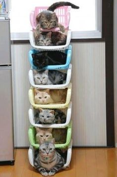 Thanks to Ikea, We have the crazy cat lady kitty organizer...