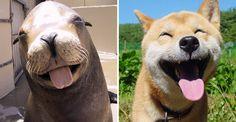 10 fotos comprovam que as focas são os cachorrinhos do mar!