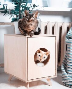 "9,090 Likes, 277 Comments - @etsy on Instagram: ""A stylish cat needs a stylish hideaway. We'd like to request a human-size version of this house,…"""