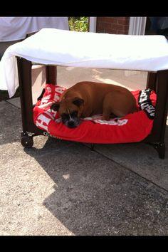Repurposed Pack N Play As A Dog Bed D I Y Pack N Play