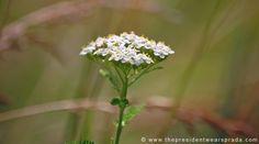 Wild flowers in bloom