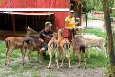 Smoky Mountain Deer Farm & Exotic Petting Zoo, Sevierville: See 848 reviews, articles, and 594 photos of Smoky Mountain Deer Farm & Exotic Petting Zoo, ranked No.3 on TripAdvisor among 84 attractions in Sevierville.