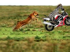 funny animals | Funny Animals Pictures