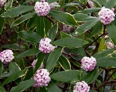 Evergreen shrubs don't disappoint. Add them to your landscape for vibrant flowers, leaves and stems in every season.