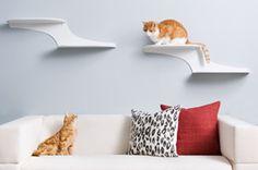 Cat Clouds Cat Shelves