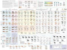 cat coat color chart. @Swistle Thistle, I have a feeling you would enjoy this.
