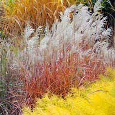 Ornamental grass is beautiful, boisterous and bountiful. They're also easy to grow and pretty much deer- and drought-tolerant. Here are 10 you might want to try in your own yard. Flowers Garden, Garden Plants, Planting Flowers, Flower Gardening, Gardening Tips, Beautiful Gardens, Beautiful Flowers, Landscape Design, Garden Design