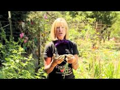 How To Grow Garlic {video} growing garlic is easy and you plant it in the fall.