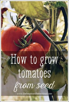 Learn how to grow tomatoes from seed with these step-by-step instructions and enjoy fresh or preserved homegrown tomatoes from your own garden all year long! Learn how to start tomato seeds, how to ca