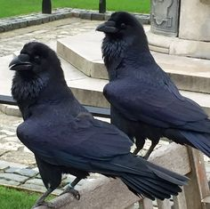 Ravenmaster-   Have you seen what that lady is wearing? pic.twitter.com/wORqnb6SIc
