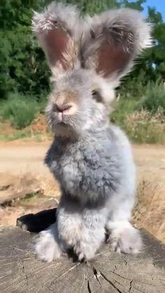 Cute Wild Animals, Baby Animals Super Cute, Cute Baby Bunnies, Baby Animals Pictures, Cute Animal Videos, Cute Little Animals, Cute Animal Pictures, Cute Funny Animals, Animals Beautiful